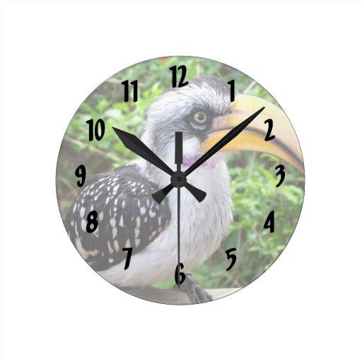 Cierre del pájaro del Hornbill para arriba que mir Reloj De Pared