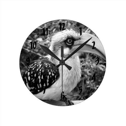 Cierre del pájaro del Hornbill para arriba que mir Reloj Redondo Mediano
