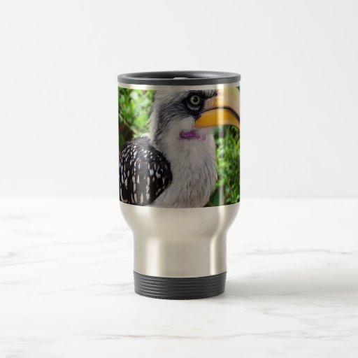 Cierre del pájaro del Hornbill para arriba que mir Tazas De Café
