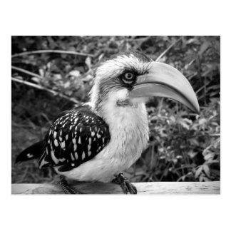 Cierre del pájaro del Hornbill para arriba que Tarjeta Postal
