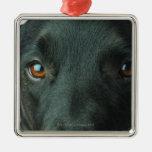 Cierre del retrato del perro para arriba adorno navideño cuadrado de metal