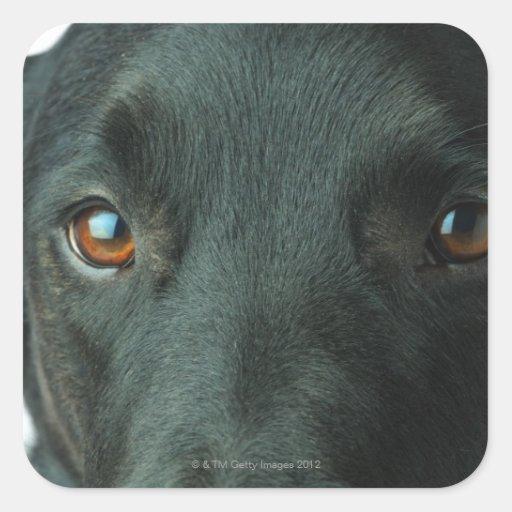 Cierre del retrato del perro para arriba pegatina cuadrada