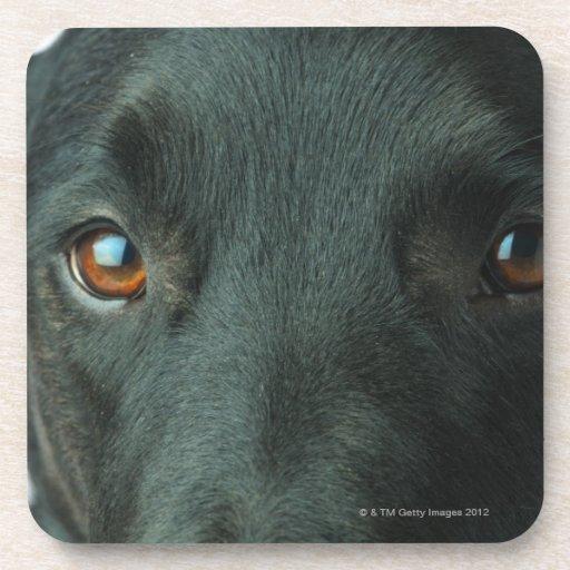 Cierre del retrato del perro para arriba posavasos de bebidas