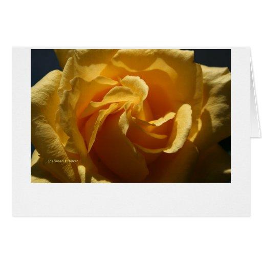 Cierre del rosa amarillo para arriba felicitaciones