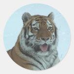 Cierre del tigre siberiano encima de la cara 2 pegatina redonda