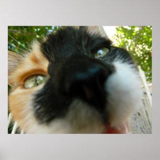 Cierre divertido de la cara del gato encima de la  póster