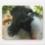 Cierre divertido de la cara del gato encima de la  alfombrillas de ratones