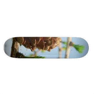 Cierre floreciente del alerce para arriba tabla de skate