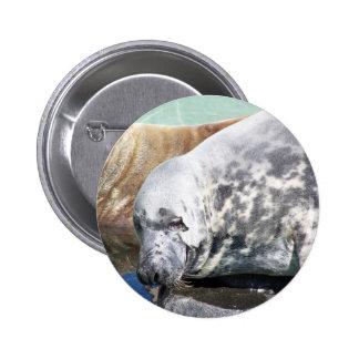Cierre gris del sello encima del retrato pins
