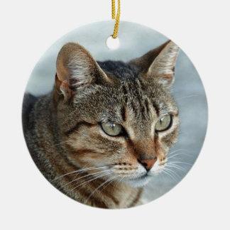 Cierre imponente del gato de Tabby encima del Ornamentos De Reyes