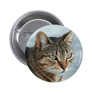 Cierre imponente del gato de Tabby encima del Pin Redondo De 2 Pulgadas