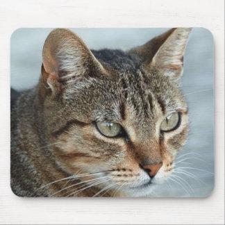 Cierre imponente del gato de Tabby encima del retr Alfombrillas De Raton