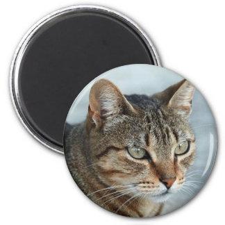 Cierre imponente del gato de Tabby encima del retr Imanes De Nevera
