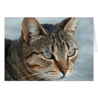Cierre imponente del gato de Tabby encima del Tarjeta De Felicitación