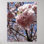 Cierre para arriba - Kyoto del flor de Sakura Impresiones