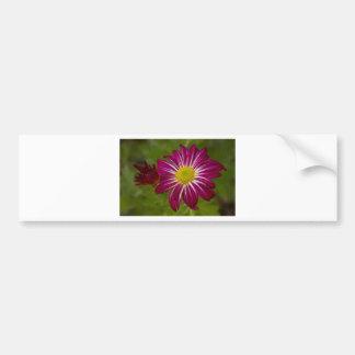 Cierre púrpura de la flor del aster para arriba etiqueta de parachoque