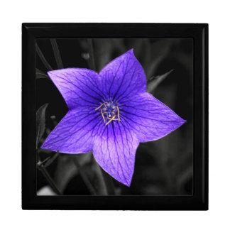 Cierre púrpura de la flor encima de la foto macra caja de recuerdo