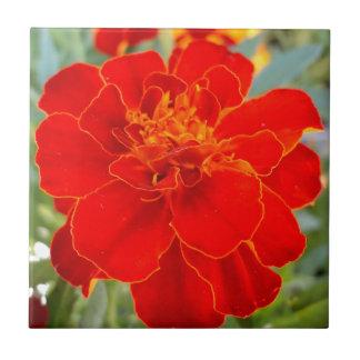 Cierre rojo de la flora del verano de la flor de azulejo cuadrado pequeño