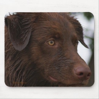 Cierre rojo de Sam Flatlandersam del perro de P000 Mousepad