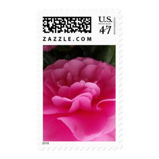 Cierre rosado de la flor de Camillia para arriba Sello