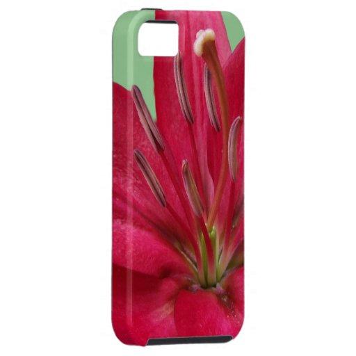 Cierre rosado de la flor del lirio encima de la funda para iPhone SE/5/5s