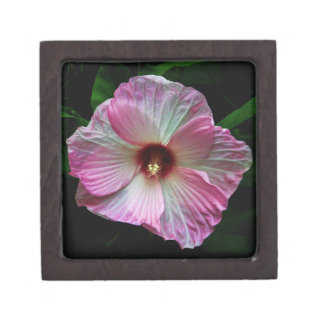 Cierre rosado de la flor encima de la foto caja de recuerdo de calidad