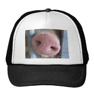 Cierre rosado de la nariz del cerdo encima de la f gorro