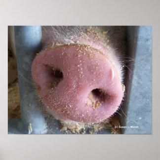 Cierre rosado de la nariz del cerdo encima de la f póster