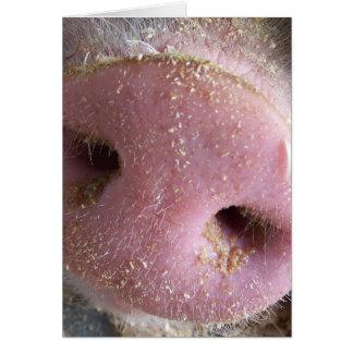 Cierre rosado de la nariz del cerdo encima de la f tarjetas