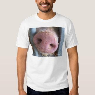 Cierre rosado de la nariz del cerdo encima de la playeras