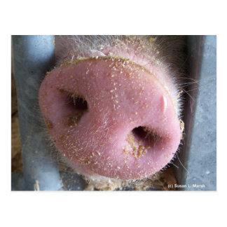 Cierre rosado de la nariz del cerdo encima de la postal