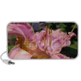 Cierre rosado del lirio encima de la foto colorida PC altavoces