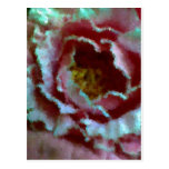 Cierre rosado del Peony para arriba Postal