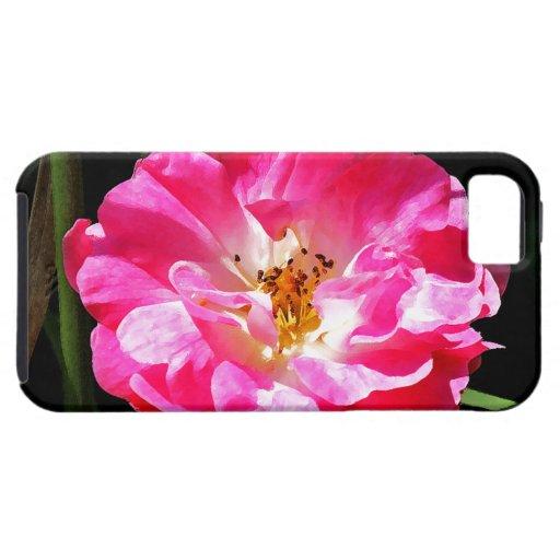 Cierre rosado del rosa para arriba iPhone 5 protector