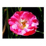 Cierre rosado del rosa para arriba postal
