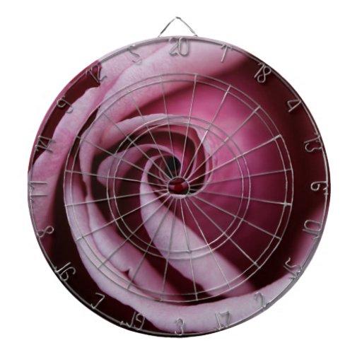 Cierre rosado magnífico del rosa encima de la foto
