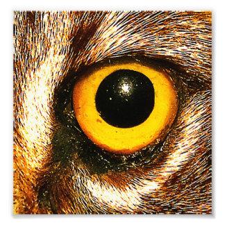 Cierre salvaje del ojo para arriba fotografía