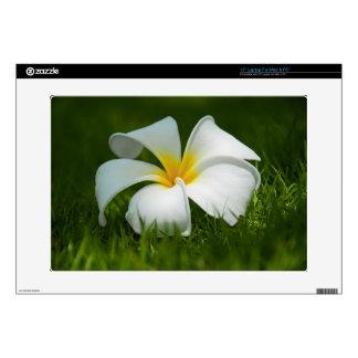 Cierre tropical blanco de la flor (frangipani) enc skins para 38,1cm portátil