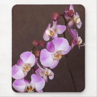Cierre violeta y blanco de la orquídea encima de l tapete de ratón