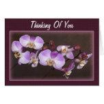 Cierre violeta y blanco de la orquídea encima de felicitacion