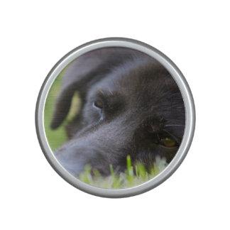 Ciérrese encima de cara vieja negra de los perros altavoz con bluetooth
