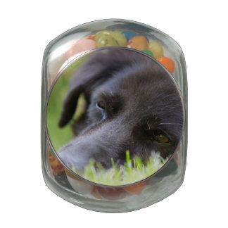 Ciérrese encima de cara vieja negra de los perros frascos cristal