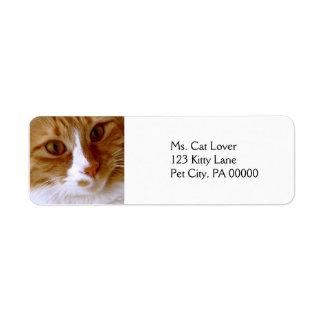 Ciérrese encima de etiquetas del remite del gato etiqueta de remitente