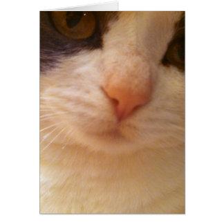 Ciérrese encima de gatito con la nariz rosada tarjeta pequeña
