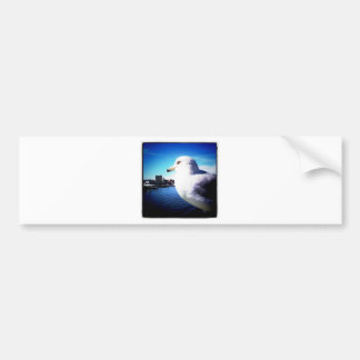Ciérrese encima de gaviota etiqueta de parachoque