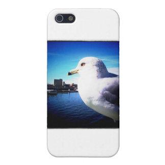 Ciérrese encima de gaviota iPhone 5 carcasas