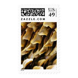 Ciérrese encima de imagen de un cono sellos
