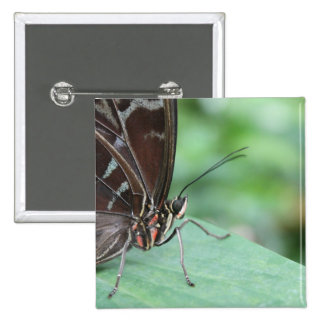 Ciérrese encima de imagen de una mariposa pins