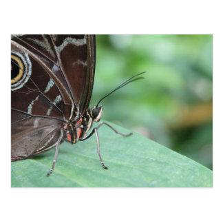 Ciérrese encima de imagen de una mariposa postales