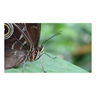 Ciérrese encima de imagen de una mariposa tarjetas de visita